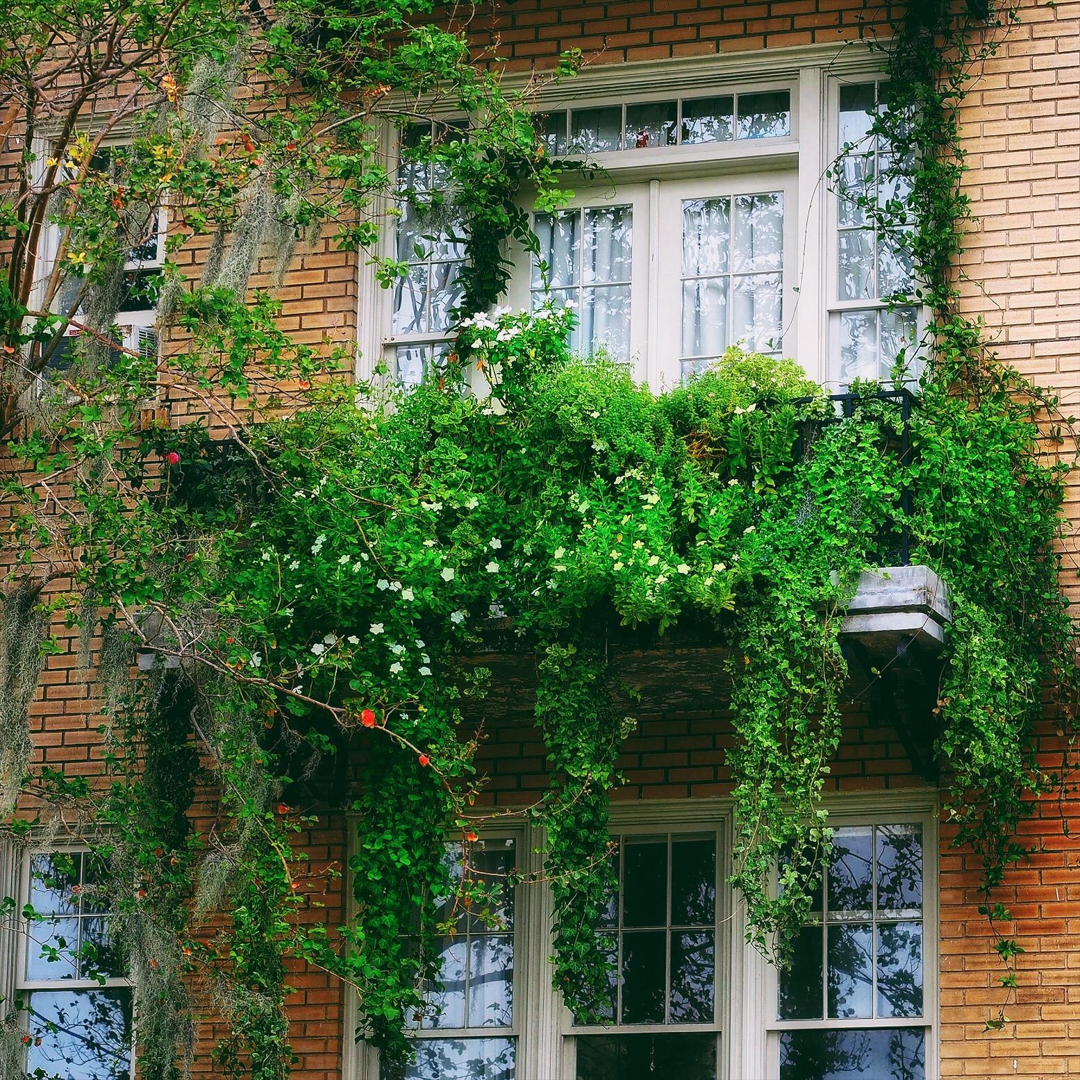A Balconey Garden – Charleston Flower Walker